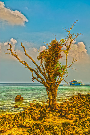 Lone Tree & Boat - Jolly Buoy Island, Andaman