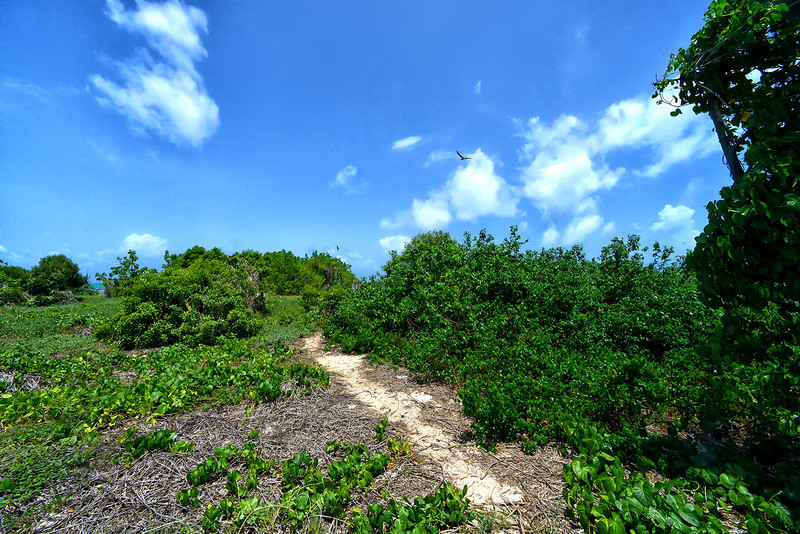 Seabird nesting colony, Little Half Moon Cay, Portland Bight Protected Area, Jamaica.