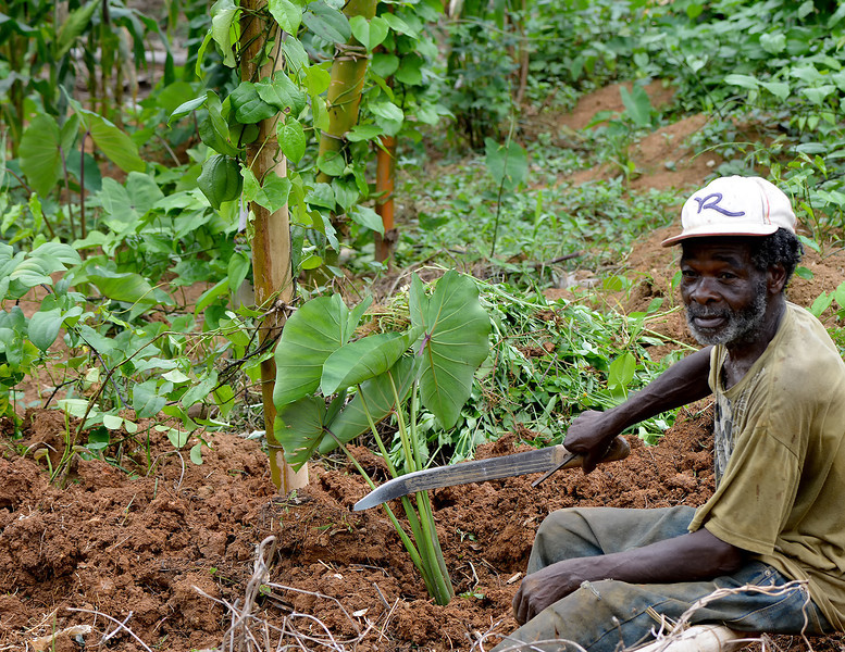 Local farmer working the ground near Flagstaff, Jamaica, by Ted Lee Eubanks.