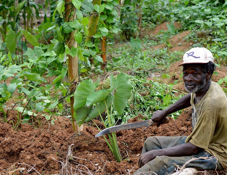 Local farmer working the ground near Flagstaff, Jamaica, by Ted Lee Eubanks.