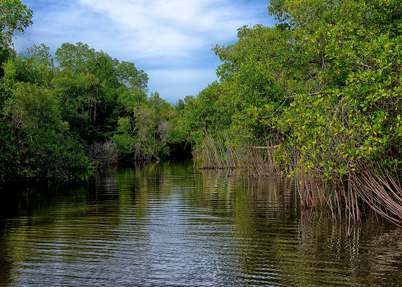 Black River, Portland Bight Protected Area, Jamaica, by Ted Lee Eubanks. This is the Black River that merges with Salt Island Creek then empties into Galleon Bay across from Great Goat Island, Black River is lined with a variety of mangroves.
