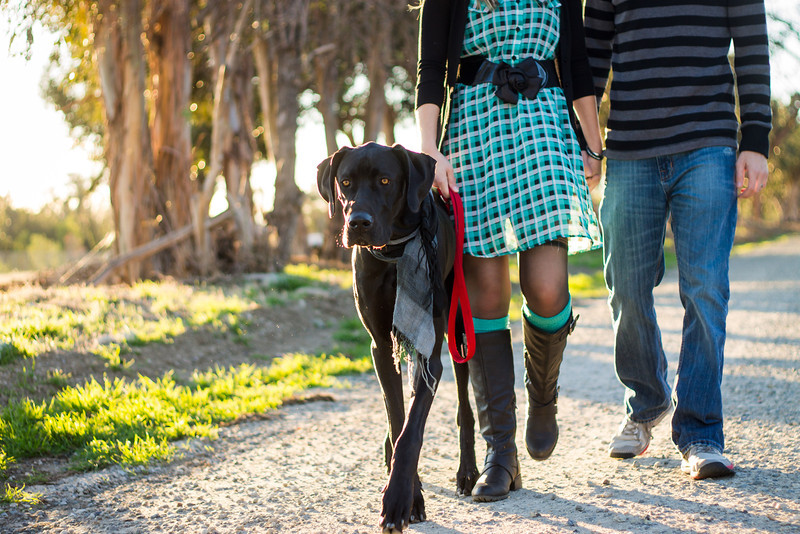 Great Dane and His Family