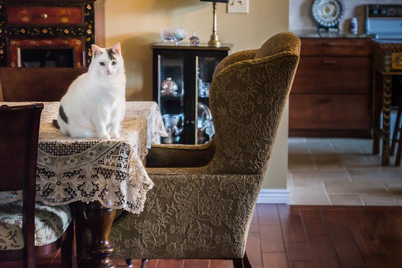 Dining_Room_Kitty