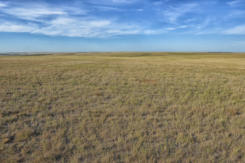 High Plains Grassland