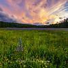 Sagehen Meadows Singular