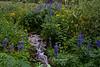 Wildflower stream Mt. Rose Wilderness