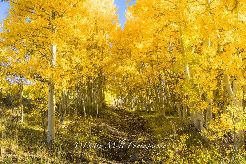 Into the Woods of Gold
