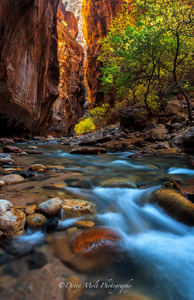Narrows in the Fall Zion
