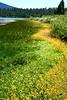 Spooner Yellow Flowers