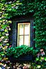 Far Niente Window