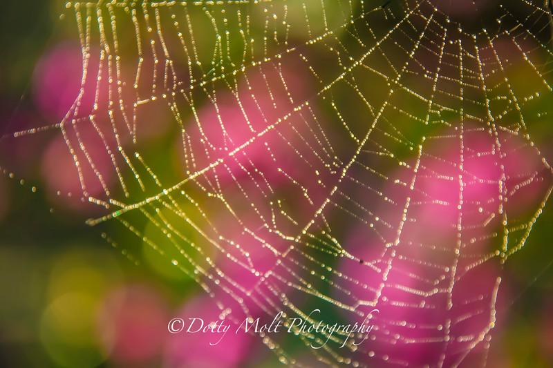 Placid Web