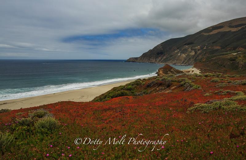 Beautiful Wildflowers along Big Sur