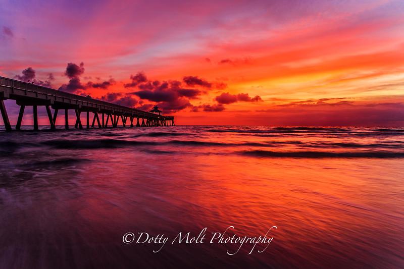 CaraCara Orange Sunrise