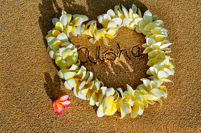 Yellow and white plumeria picked and ready for lei making by Moki on the North Shore, Oahu, Hawaii