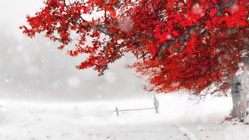 Storm Shack Tree Red Snow Leaves Early Autumn Countryside Winter Wallpaper For Desktop Background