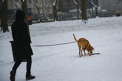 Man walks dog in snow in D.C.