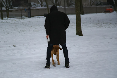 Man plays with dog in snow in D.C.