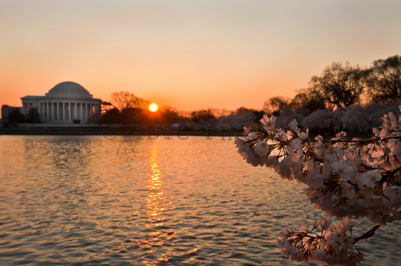 Cherry Blossoms 2011 - Tidal Basin Washington D.C.