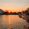 Cherry Blossoms 2011 - Tidal Basin Washington D.C.