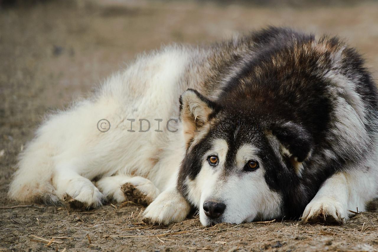 Alpha resting