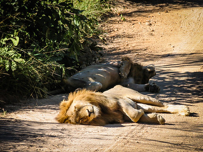 Cat Nap in Africa
