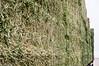 Tilth-ForestGlen-BrokenBanjo-004