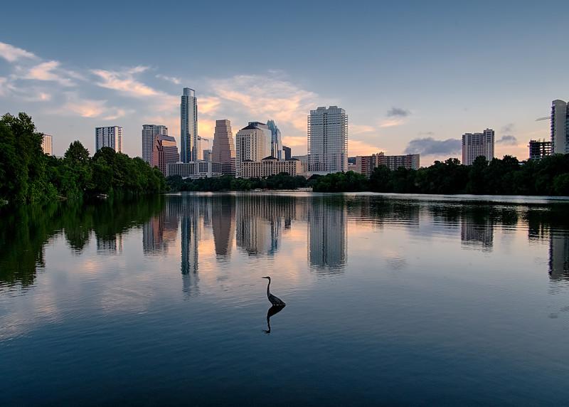 Great Blue Heron and Austin Skyline