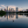 Great Blue Heron and Austin Skyline