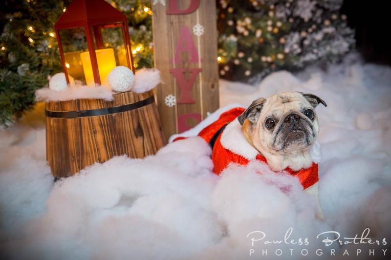 Christmas Mini 2019_Pattie McNeilly-6