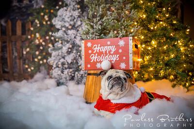 Christmas Mini 2019_Pattie McNeilly-24