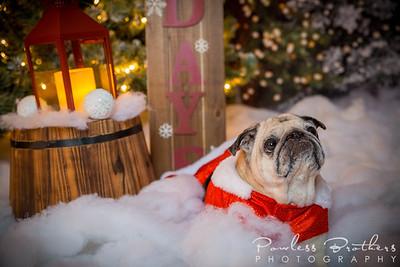 Christmas Mini 2019_Pattie McNeilly-14