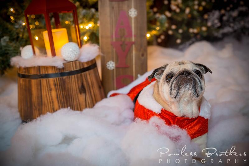 Christmas Mini 2019_Pattie McNeilly-9