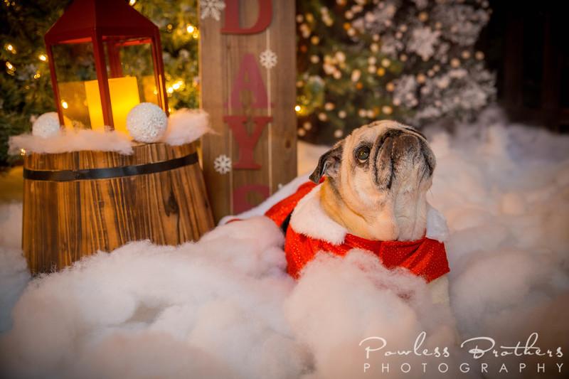 Christmas Mini 2019_Pattie McNeilly-4