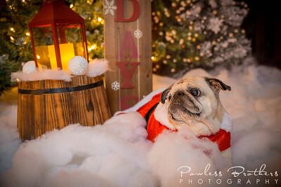 Christmas Mini 2019_Pattie McNeilly-2