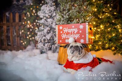 Christmas Mini 2019_Pattie McNeilly-23