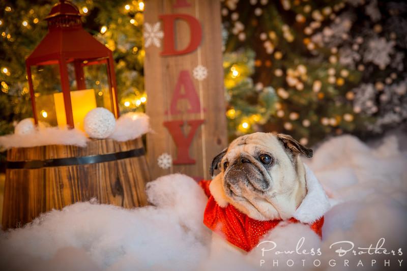 Christmas Mini 2019_Pattie McNeilly-15