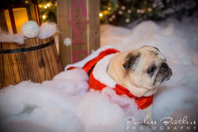 Christmas Mini 2019_Pattie McNeilly-8