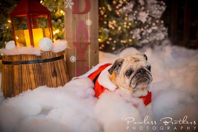 Christmas Mini 2019_Pattie McNeilly-3