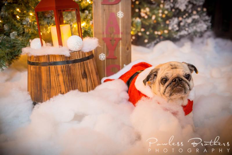 Christmas Mini 2019_Pattie McNeilly-5