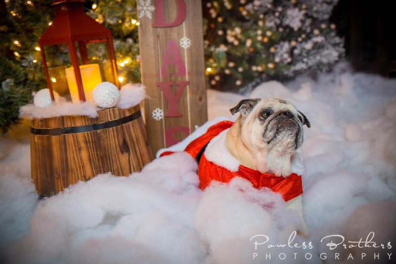 Christmas Mini 2019_Pattie McNeilly-7