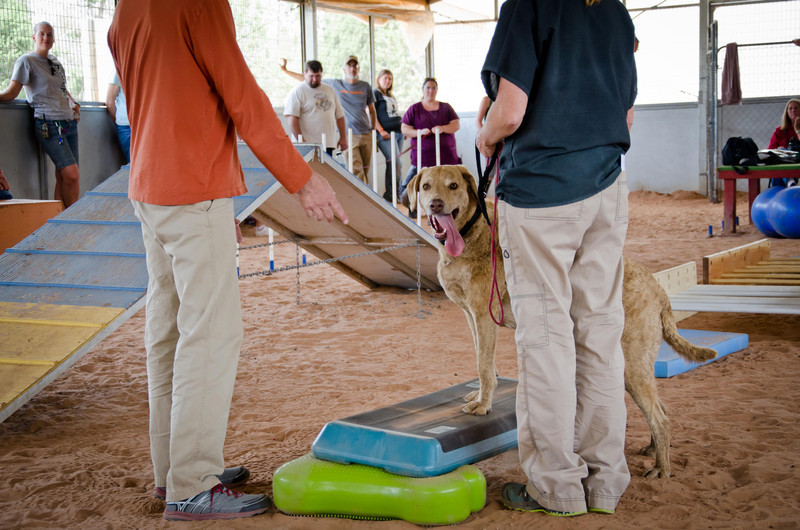 Best Friends Animal Shelter Rehab Demonstration