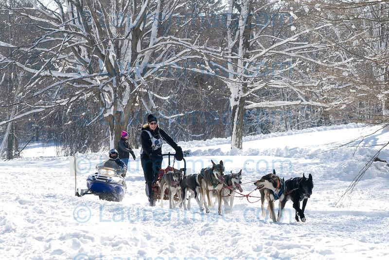 Meg Mizzoni and her team of Alaskan Huskies in the last mile of the eight mile race.