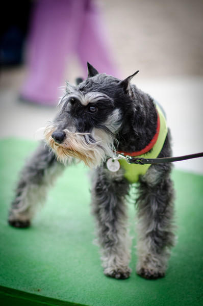 Woerner Workshop: Conditioning & Care for Canine Athletes Young & Old