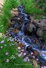 Tamarack Babbling Brook