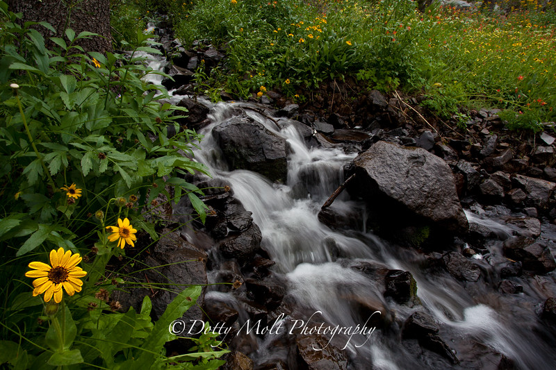 Sunflower Brook