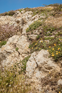 DAISY_COBY_2018_POINT_REYES_SPRING_0071
