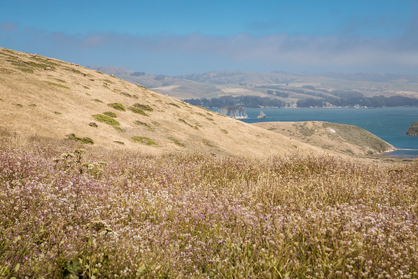 DAISY_COBY_2018_POINT_REYES_SPRING_0077