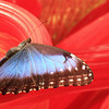 IMG_butterfly 2 20x60