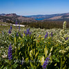 God's Garden, Carson's Pass, Caples Lake