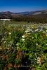 God's Garden, Carsons Pass, Ca